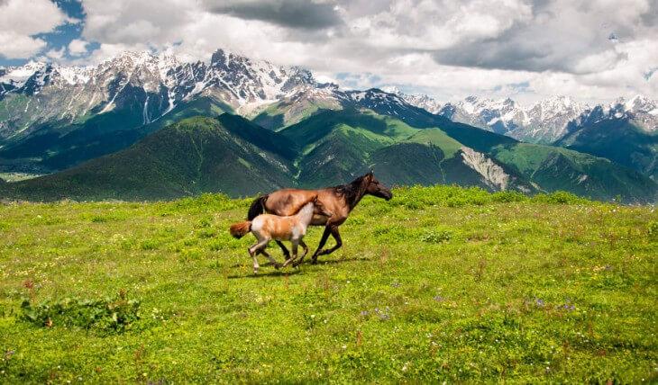 Caucasus Campaign