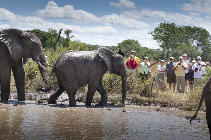 Victoria Falls Elephant Interaction Day