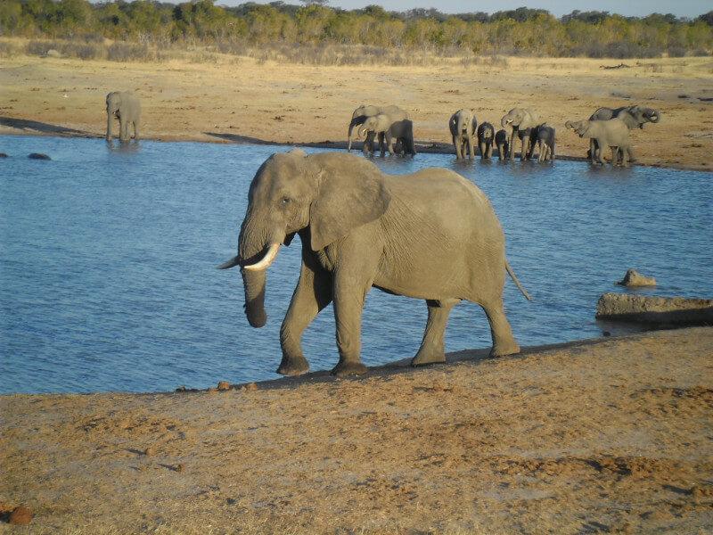 6 Nights Hwange Safari