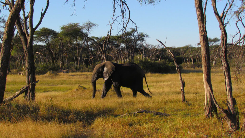 Somalisa Expeditions to Victoria Falls