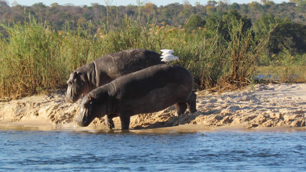 Imbabala Zambezi Lodge