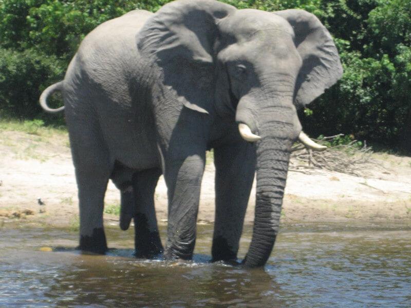 Victoria Falls to Imbabala Zambezi Lodge