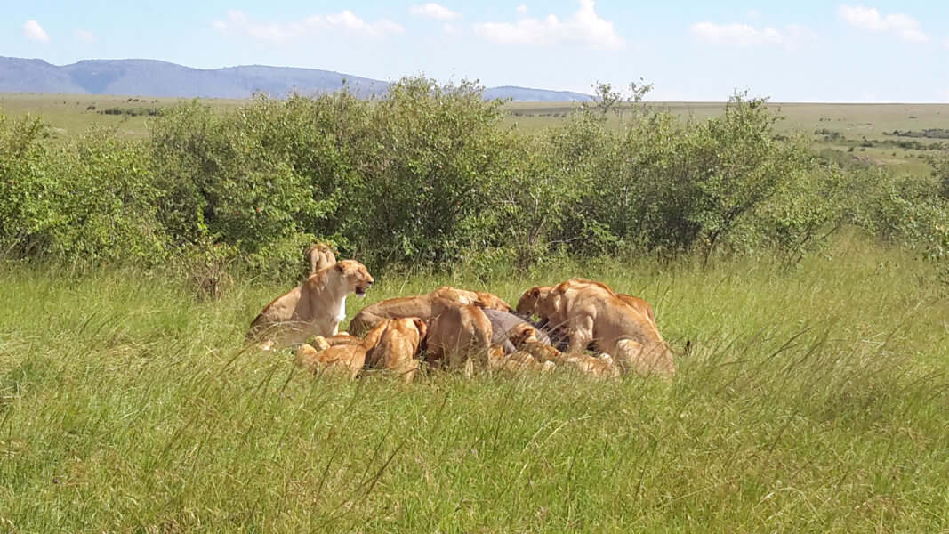 Masai Mara Full Day