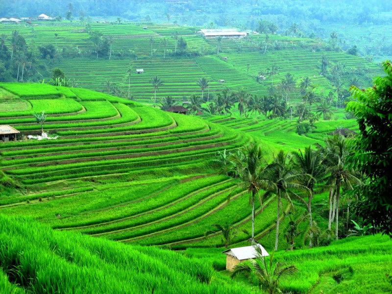 4 Days Ubud Soft Adventure