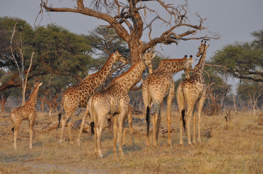 Drive to Chobe National Park