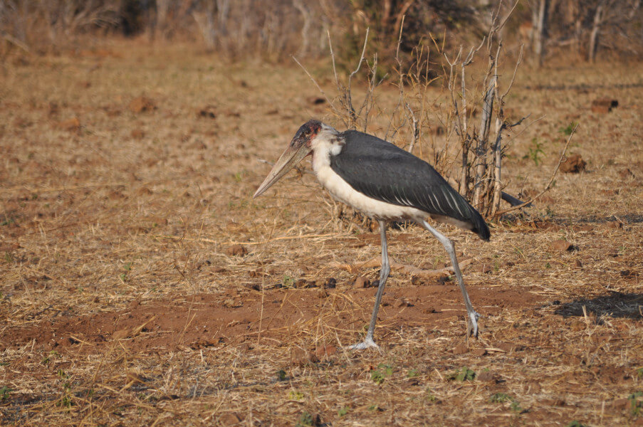 Drive to Moremi Game Reserve