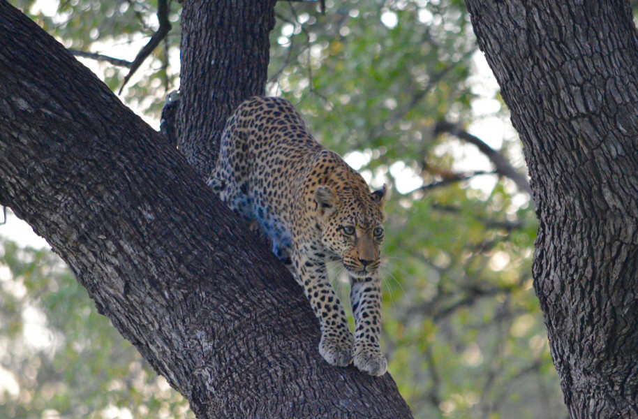 Leopard Tour (11 nights, 12 days)