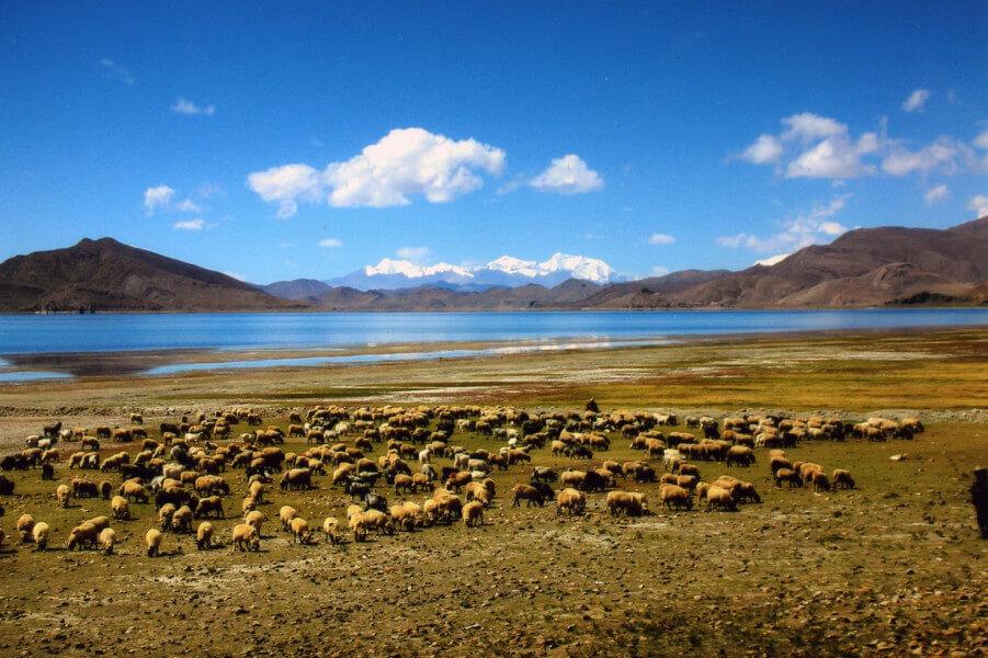 Drive from Kangru monastery to Rimpo gra