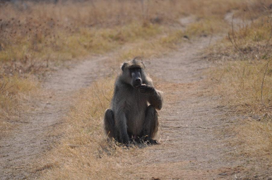 In Livingstone