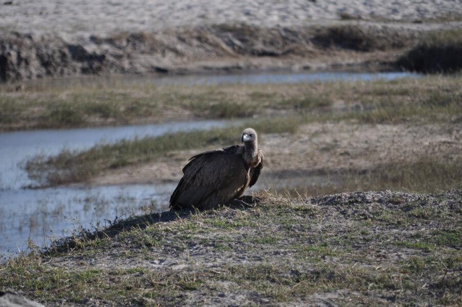 At Makgadkgadi Salt Pans
