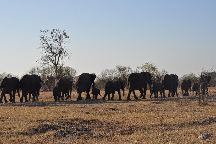 In Chobe National Park