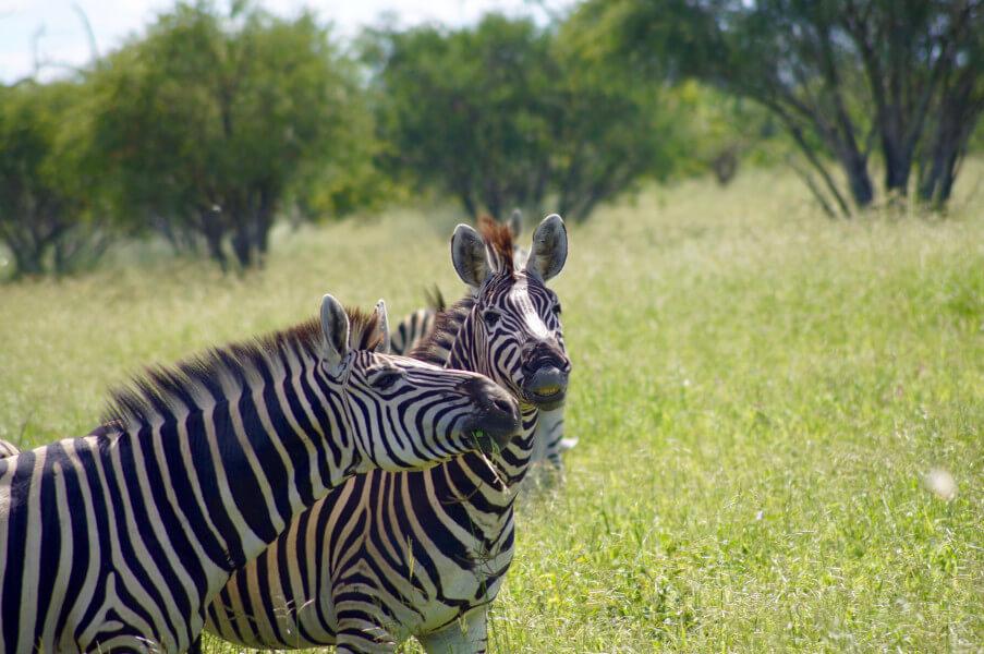 Drive to Moremi Game Reserve, Khwai area