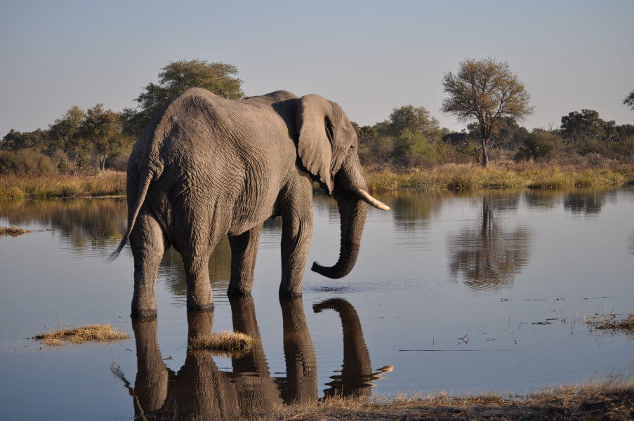 In Moremi Game Reserve