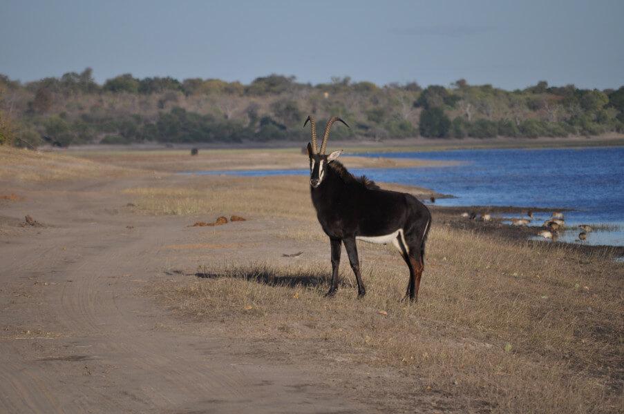 In Moremi Game Reserve, Xakanaxa area