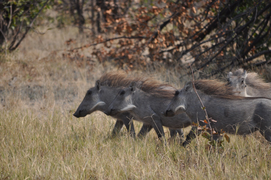 Explore Moremi Game Reserve
