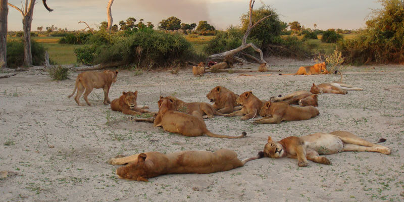 Lion Tour (6 nights, 7 days)