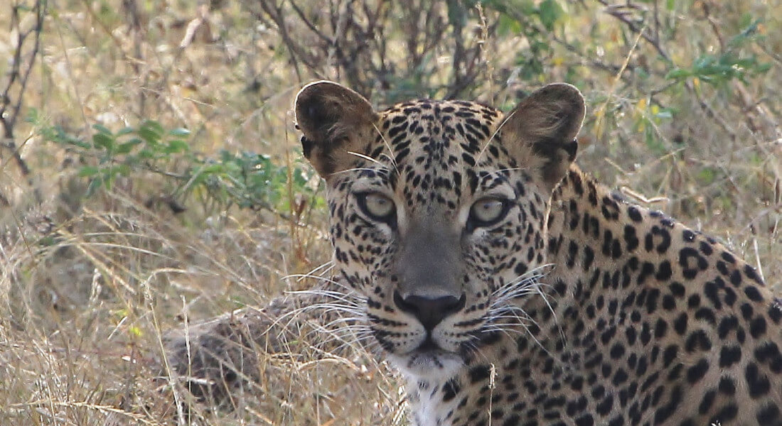 Wild Sri Lanka