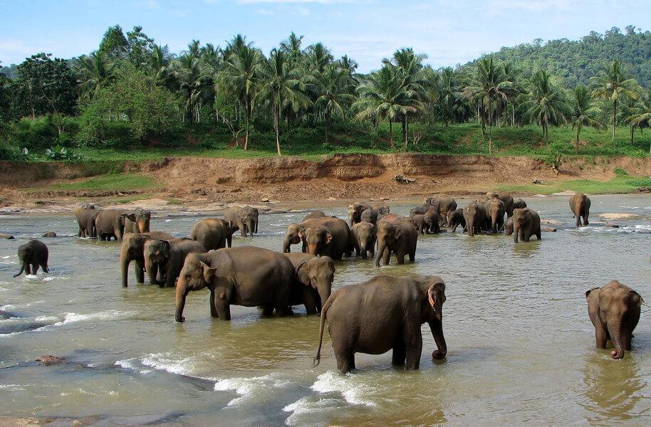04 Days Glimpse Sri Lanka Tour