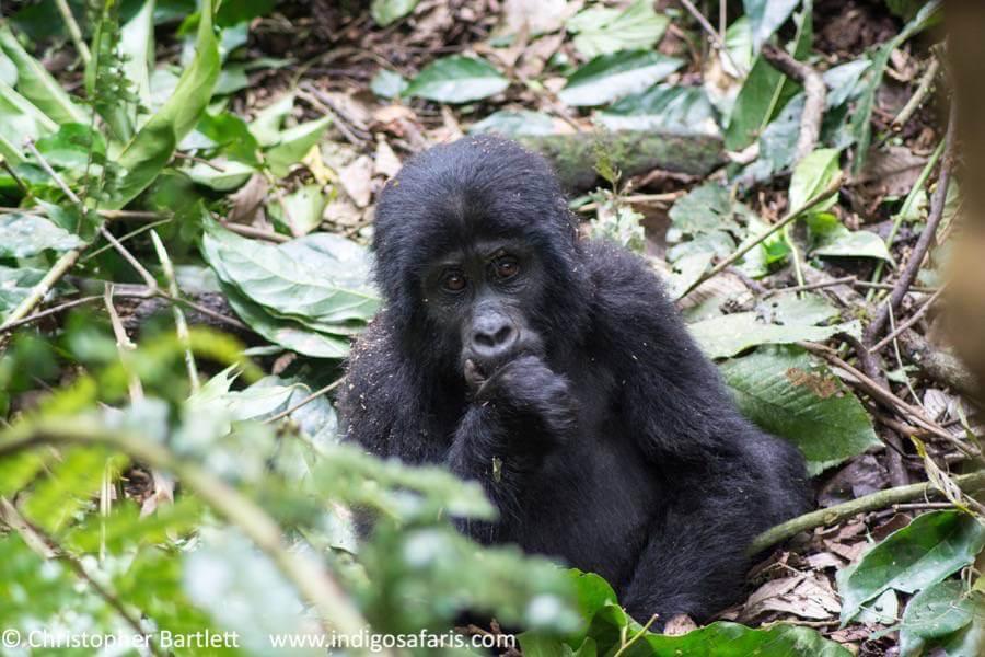 7- day Discover Uganda Safari - Private Accommodated