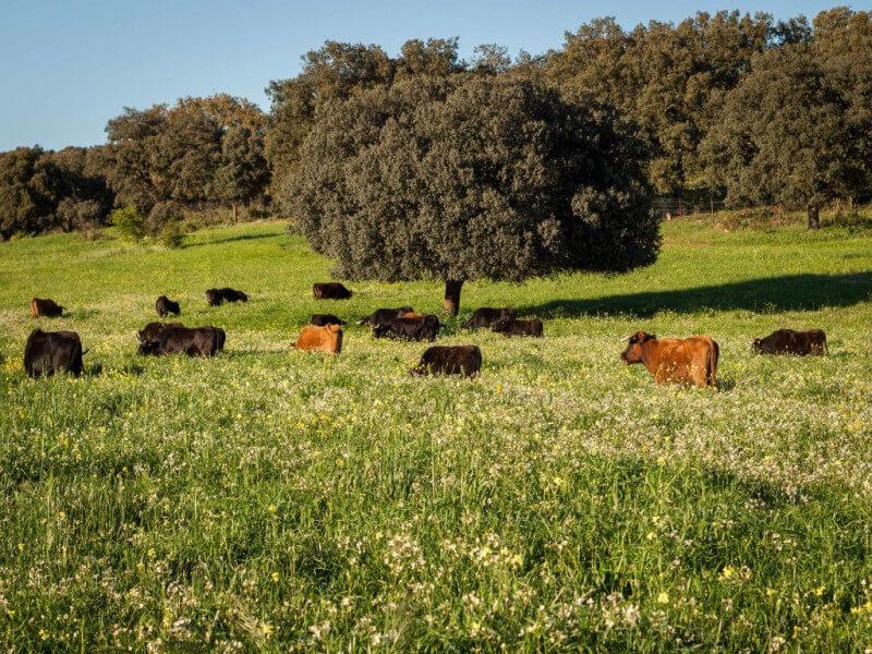 Drive to Ronda and Visit a Bull Ranch