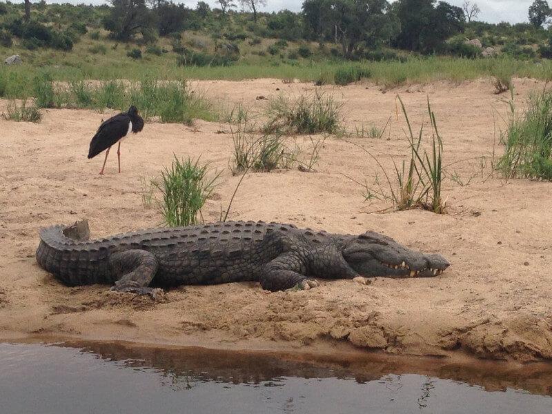 3 Day Budget Kruger Park Safari