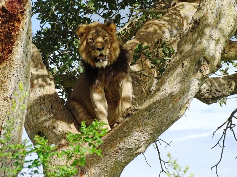 12-days Uganda Nature & Wildlife