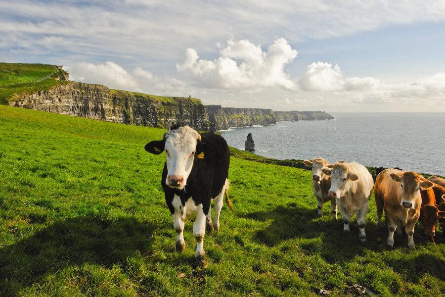 Enhanced Irish Honeymoon
