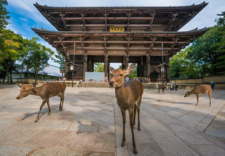 Full Day Kyoto and Nara Sightseeing