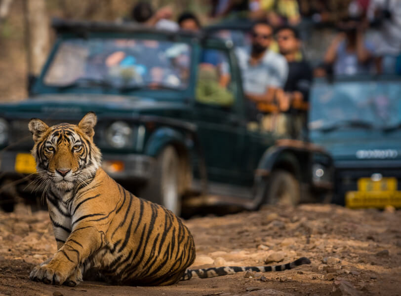 Golden Triangle with Tiger Safari at Ranthambore