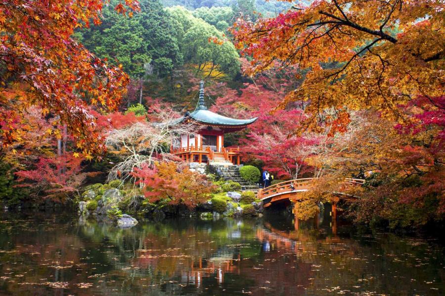 Kyoto and Nara Sightseeing