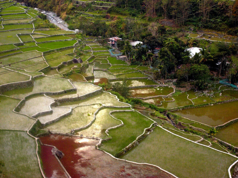 Explore Banaue Rice Terraces | Trekking with Jeepney Ride Experience