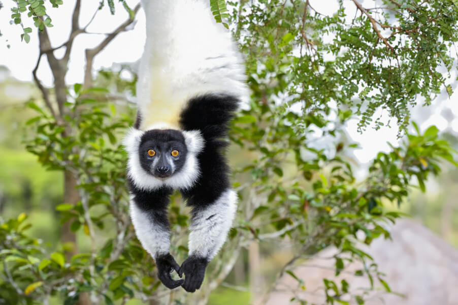 12-days Madagascar
